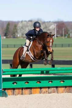 - Art Of Equitation Dream Barn, Hunter Jumper, Cute Horses, Horse Pictures, Show Horses, My Happy Place, Animals Beautiful, Cute Kids, Equestrian
