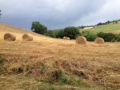 Giugno 2013: ci si prepara per alimentare gli animali durante l'inverno. Ma quanto sono belli questi campi?