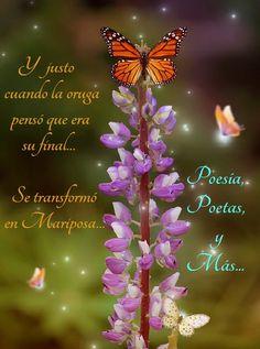 De oruga a mariposa https://www.facebook.com/pages/Poesía-poetas-y-más/36347968033276