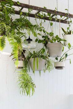 Plant Ladder, Hanging Ladder, Rustic Pot Racks, Indoor Garden, Indoor Plants, Old Orchard, Decoration Plante, House Plants Decor, Houseplants