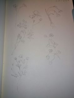 Drawing of some random flowers
