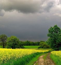 on a cloudy day in the country Landscape Photos, Landscape Art, Landscape Paintings, Landscape Photography, Nature Photography, Country Life, Country Roads, Nature Pictures, Amazing Nature