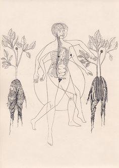 Illustrations by Har