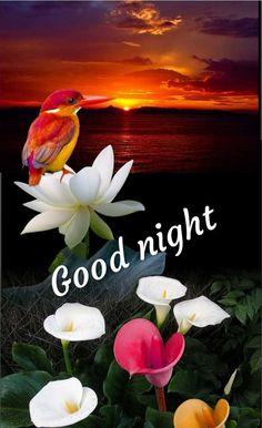 New Good Night Images For Whatsapp Good Night Thoughts, Good Night Love Quotes, Good Night I Love You, Good Night Prayer, Good Night Friends, Good Night Blessings, Good Night Gif, Good Night Messages, Good Night Wishes