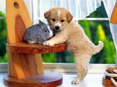 Rabbit and dog :)