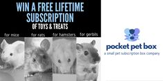 Win a Lifetime Subscription from Pocket Pet Box! by Pocket Pet Box. Hosted by KingSumo Giveaways Small Animal Rescue, Hamster Life, Bunny Hutch, Pocket Pet, Animal Facts, Chinchilla, Giveaways, History, Pets