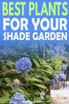 These flowering perennials and shrubs are perfect for your shady garden that needs some color to brighten it up. Find out our picks for the best plants that grow in shade. #fromhousetohome #gardening #gardenideas #shade #plants #shadeplants