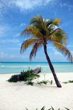 Isla Mujeres. MEXICO. I almost always cry when I leave this little island....I love it.