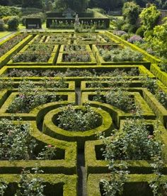 ~Post war rose garden at Seaton Delaval, England