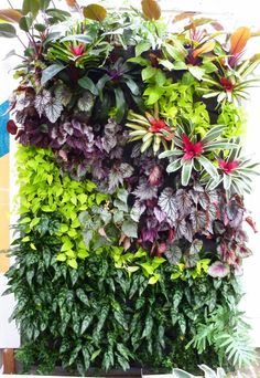 Vertical Gardens Plants On Walls vertical garden systems: Full Tropical Walls at SF Foliage Vertical Garden Systems, Vertical Garden Plants, Vertical Garden Design, Vertical Bar, Patio Plants, House Plants, Jardim Vertical Diy, Vertikal Garden, Pot Jardin