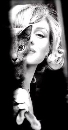 Cat Marilyn #cat #marilyn #sexy http://amzn.to/2k2HTMQ