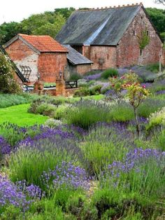 Isle of Wight Lavender Inc. (farm, tea room, store), Newport, Isle of Wight. Country Barns, Old Barns, Country Life, Country Living, French Country, Farm Gardens, Outdoor Gardens, English Garden Design, Growing Lavender