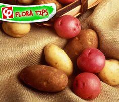 Για να διατηρηθούν σκληρές οι #πατάτες και να μη βγάλουν φύτρες, βάλτε 2-3 μήλα ανάμεσά τους... Το μυστικό βρίσκεται στο αιθυλένιο που εκλύουν τα #μήλα! Επίσης, φυλάξτε τις σε σκιερό μέρος.  #FloraTips Marketing Tools, Social Media Marketing, Vegetables, Food, Essen, Vegetable Recipes, Meals, Yemek, Veggies