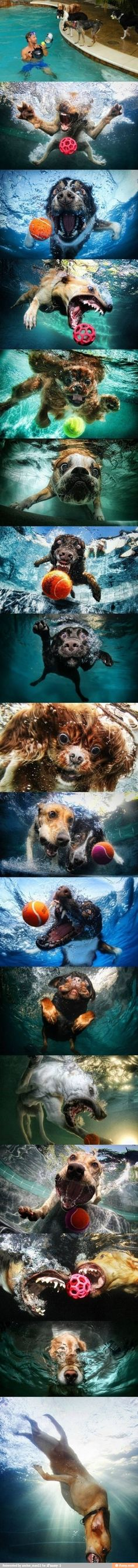 Dogs underwater / iFunny :)