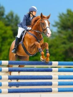 show jumping riding - Google Search