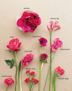 Types Of Red Flowers Names Flower names, flower types