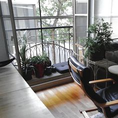 My private garden in the city