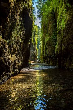 Often overlooked because of its location next door to more famous Multnomah Falls, Oneonta Gorge is a U. Forest Service-designated area due to the unique aquatic plants that grow there. The hike to the gorge is an easy loop with just 400 feet o Places To Travel, Places To See, Oregon Travel, Travel Portland, Oregon Vacation, Photos Voyages, Amazing Destinations, Travel Destinations, Vacation Spots