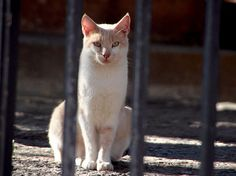 gatito blanco, via Flickr.