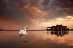 White swan  Landscapes photo by christos-lamprianidis http://rarme.com/?F9gZi