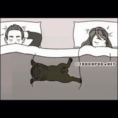 A pugs life
