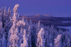 Koli Finland, Wildlife, Nature, Naturaleza, Nature Illustration, Off Grid, Natural