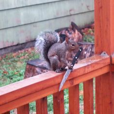 17 Squirrels Who Just Don't Give A Fuck