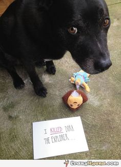 Guilty dog with the eyes of a killer. Hilarious pic. Good dog / bad dog shame sign