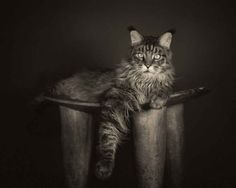 ae4f603aa08a These striking and captivating animal portraits are taken by professional  photographer Vincent Lagrange. Vincent is a fine art photographer who  specialises ...