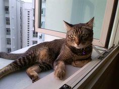 Momo  Cat   Pawshake singapore