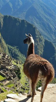 Despite scientists decades of studying the sacred mountain city, there are still many mysteries and questions unanswered. Here are 5 Little Known Secrets of Machu Picchu.