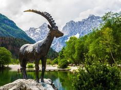 Zlatorog, Wahrzeichen von Slowenien Seen, Animals, Lakes, National Parks, Waterfalls, Europe, Viajes, Campsite, Travel Report