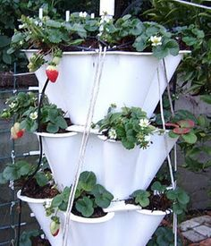 Build a strawberry tower!