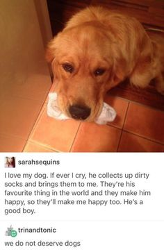 Dogs are just the sweetest things in the world. We don't deserve their kindness and thoughtfulness.