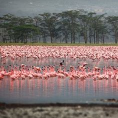 365 WONDERS OF THE WORLD: #75  Lake Nakuru National Park in Kenya is home to one million resident flamingos so its no wonder its dubbed the bird watchers paradise   Book flights>> http://www.travelstart.co.za/lp/nairobi/flights  #365wondersoftheworld #moscow #europe
