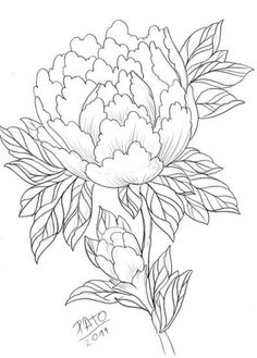 peony 2 by patoink on DeviantArt