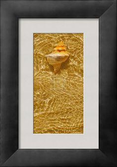 AllPosters - Ripple Shell IV  Art Print - 20 x 40 cm  Tony Koukos