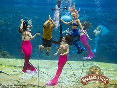 jimmy buffett mermaid | ... image sent to us during Jimmy Buffett's visit to ... | Mermaid Fri