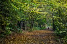 #Glenrothes Town Park near Leslie House. Photo by Ian McCracken https://www.flickr.com/photos/ianrwmccracken http://www.ianmccracken.co.uk/index.html