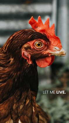 Your choices determine their fate. Save the planet go vegan Vegetarian Quotes, Vegetarian Starters, Vegan Quotes, Vegetarian Cookbook, Vegan Vegetarian, Vegetarian Recipes, Mercy For Animals, Vegan Facts, Vegan News