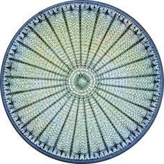 Photograph:Magnification of a diatom reveals its beautiful symmetry.