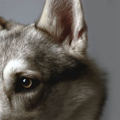 [Other]Arya Stark aesthetic wolf Eddard Stark, Sansa Stark, Bran Stark, Little Red Riding, Red Riding Hood, Remus Lupin, Lily Evans, Twilight, Maia Roberts