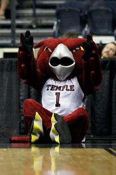 The Temple Owl
