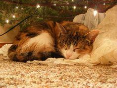 Waiting for Santa....
