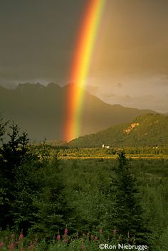 #Rainbow Fireweed, Palmer, Alaska.     -   http://vacationtravelogue.com Best Search Engine For Hotels-Flights Bookings   - http://wp.me/p291tj-8N