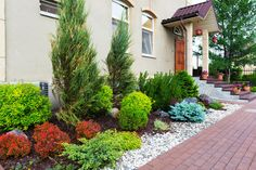 Natural flower landscaping in home garden. This front yard has numerous beautiful bushes and shrubs on display at the left side of the door.