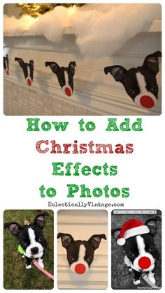 How to Add Effects to Photos - Fun Pet Photo Christmas Ideas! eclecticallyvintage.com