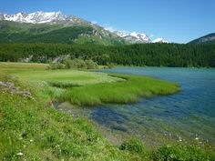 Lake Sils - Sils im Engadin, Switzerland