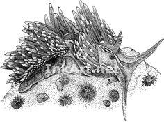 Opalescent Sea Slug or Nudibranch (Hermissenda crassicornis) Line ...