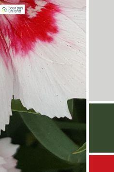 Une palette gris, vert et rose. Si tu souhaites réaliser ta propre palette personnalisée, je t'accompagne dans ce tutoriel pas à pas. Pantone, Plant Leaves, Rose, Colors, Plants, Inspiration, Gray Green, Biblical Inspiration, Pink